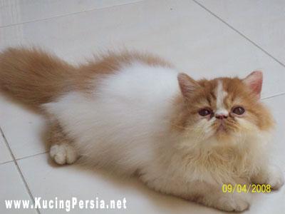Info Unik : 6 Fakta Unik Tentang Kucing Daftar Harga